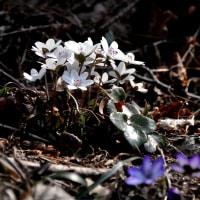 春の小さな旅2