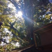 大木に光が射す