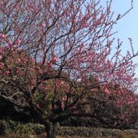春の にほひ