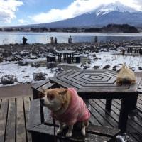 富士山で会った犬