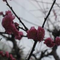 皆さん、桜の開花も間近のようで・・・春の陽気を味わっていますか!