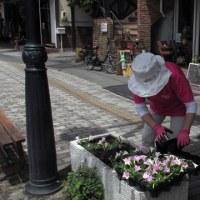 <軽井沢旧道>婦人会の皆さんによる花壇植え