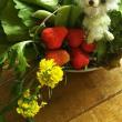 お野菜とクマちゃん