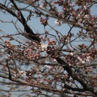 + 春は二分・・・ 実質的出家論  清水冨美加の出家の波紋