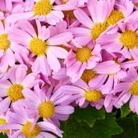 ひさしぶりに花の写真です。
