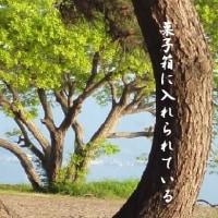 2016年11月号・角川入選句・甲虫