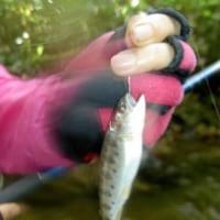 初秋の巨大ヤマベ釣り