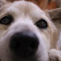 愛犬まるがいなくてもやっちゃうコト
