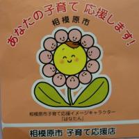 生菊芋の販売(白芋・赤芋)~神奈川県相模原市緑区・高城商店