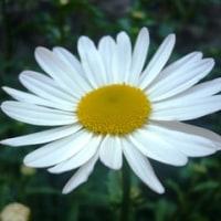 庭の花にも心があった