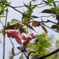 公園の花々 (続2)