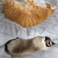 冬は眠る猫がよく似合う