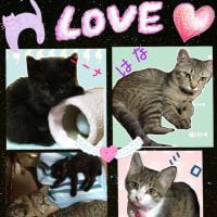 新たな家族の猫さん達……