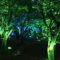 宇部市ときわ公園 『呼応する森』