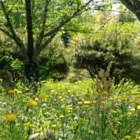 雑草の花壇