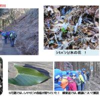 2017年01月11日 自主巡回 高尾山内【厳冬期のつり橋点検及びシモバシラ草の確認】