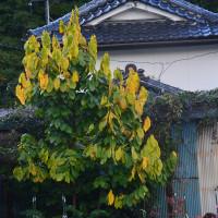 我が家の秋・・・・淋しい秋
