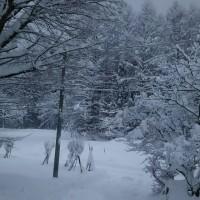 やっと降りました!雪、、、。