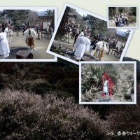 香春ウォーキングと豊前河津桜