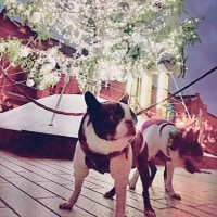 赤レンガ倉庫・クリスマスツリー2016