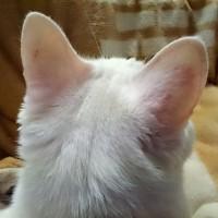 左耳の後ろ見てニャう。