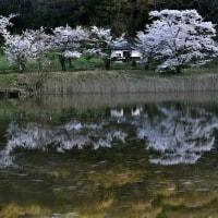 映り込みと花びらの流れ