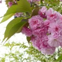 デジブック 『春の舞台に』