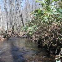 小川が流れていて、一面の湿地帯です!
