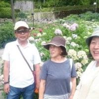 三室戸寺に紫陽花と蓮の花を観に行って来た