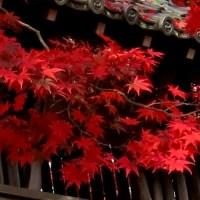 京都 真紅の紅葉