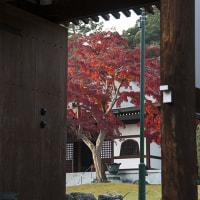 能仁寺、紅葉。