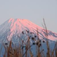 今朝もきれいな富士です
