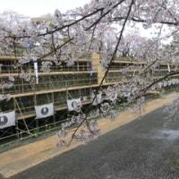 弘前城の桜 その二