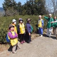 和束 茶源郷ガイドの会 活動報告 4月2日(日)