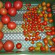 【収穫】枝豆、とまと、おくら【管理】オクラ、さつまいも、枝豆、トマト、にんじん