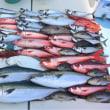 近畿地方東海地方の釣り大好き方‼️一緒に釣りをしませんか‼️3000〜4000円でジギングを楽しめます。