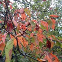 好古園の秋 桜紅葉