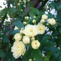 春のお花が次から次と・・・☆