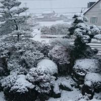今年の初雪がすごいことに
