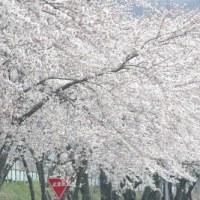 私の好きな春の風景♪♪♪