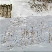 雪の上の虫 - 11
