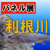 野田の関宿城博物館でのパネル展「利根川水系に生息する魚たち」