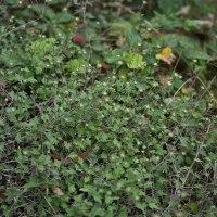 辿り着いたムラサキセンブリの花園は・・・・     2016.10.23.(4)