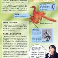 始祖鳥はハ虫類と鳥類の中間型ではない!