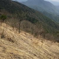 新緑の木曽