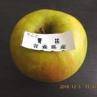 16/12/3 林檎の新品種 「青林」