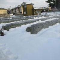 雪で埋まった