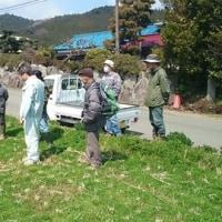 緑肥利用の稲作農業の実証圃研究