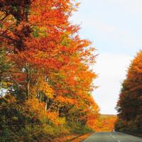 紅葉が見たくて 国道397号
