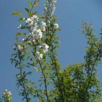4月23日今週の畑の花